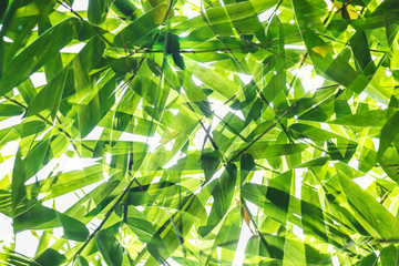 Poster de jardin Bambou Green bamboo leaf pattern on white background