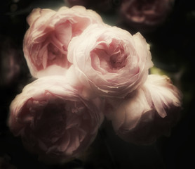 Beautiful bouquet of pink roses on a dark background, soft and romantic glamourous filter, vintage flowers looking like an old painting
