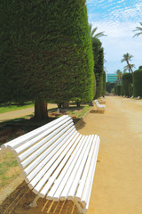 A wooden bench in Genoves park, located in the city of Cadiz, Spain