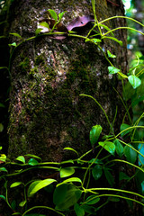 Green moss in a tree