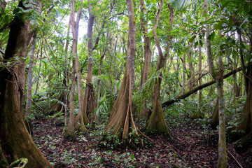 Wet tropical forest