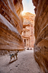 The temple-mausoleum of Al Khazneh in the ancient city of Petra in Jordan. The dog on the foreground.