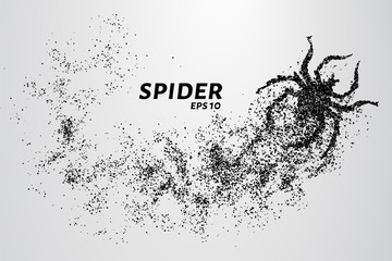 Spider of particles. The spider consists of small circles.