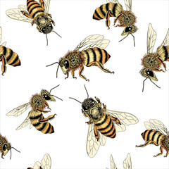 Bee seamless pattern in honey spectrum color. Vector illustration of sketched bees from various angles in detail.
