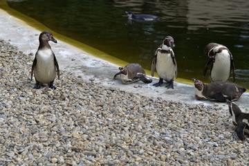 Humboldt Penguins Group