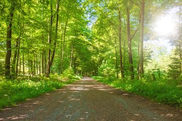 Wanderweg mit Sonnenschein im Aachener Wald zum Dreiländereck Deutschland, Niederlande, Belgien