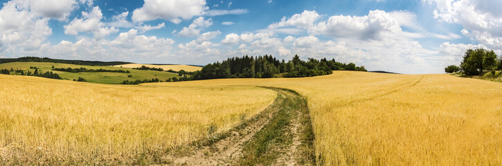 Wall Murals Melon Panoramic shot of summer countryside with dirt road between fields