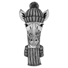 Camelopard, giraffe wearing knitted hat and scarf