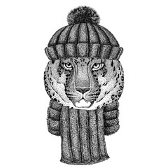 Wild cat Leopard Cat-o'-mountain Panther wearing knitted hat and scarf