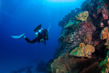 Underwater divers with coral reefs with fish, Similan, Andaman Sea, Thailand