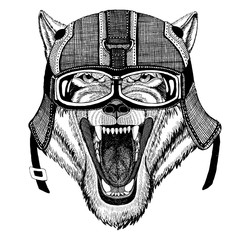 Wolf Dog Wild animal wearing motorcycle helmet, aviator helmet Illustration for t-shirt, patch, logo, badge, emblem, logotype Biker t-shirt with wild animal