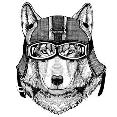 Wolf Dog wearing motorcycle helmet, aviator helmet Illustration for t-shirt, patch, logo, badge, emblem, logotype Biker t-shirt with wild animal
