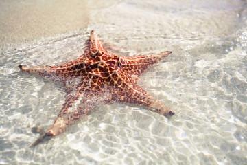 Closeup Starfish