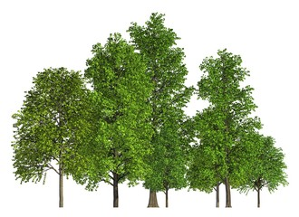 Group of trees isolated on white 3d illustration
