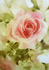 pink roses oil color on canvas.valentine Greeting Card.  Festive love postcard.oil color painting,oil colour hand painted