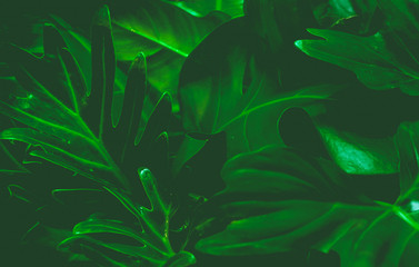 Green background concept.Tropical palm leaves, jungle leaf close up