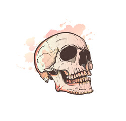 Skull and watercolor blots