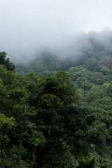 Foggy scenes of a tropical rain forrest