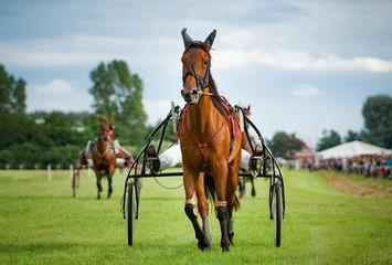 Trabrennsport -Pferd beim Trabrennen