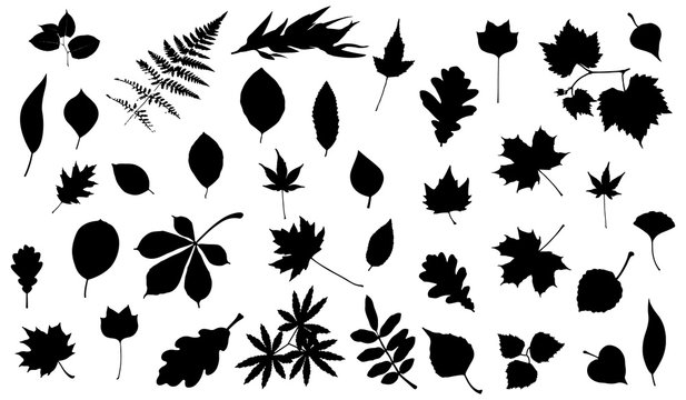 Silhouettes of tree leaves