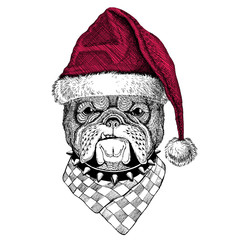 Bulldog Christmas illustration Wild animal wearing christmas santa claus hat Red winter hat Holiday picture Happy new year