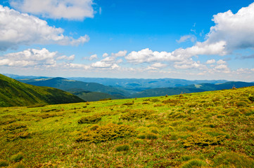 Bright summer morning in the Carpathian mountains. Picturesque outdoor scene on the mountain valley in June, Ukraine.