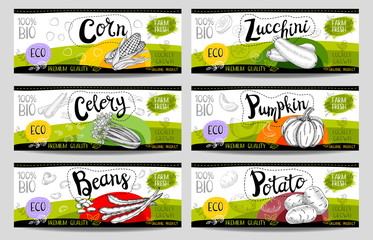 Set of colorful stickers in sketch style, food and spices, white, horizontal. Pumpkin, zucchini, corn, celery, potato, beans. Vegetables, farm fresh. locally grown. Hand drawn vector illustration.