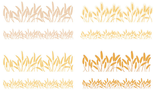 Strips waving ears of cereals plants. Set of stripes of repeating naturally crossed bunches of cereals