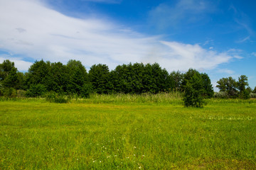 Summer landscape with green trees, meadow and blue sky