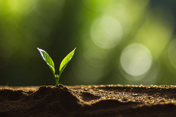 Plant a tree in nature,coffee tree,fresh,tree step