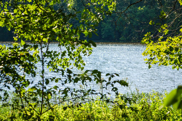 Green tree leaves framing water in lake during summer in peaceful landscape