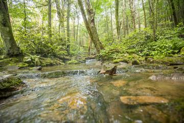 forest stream flowing around rocks