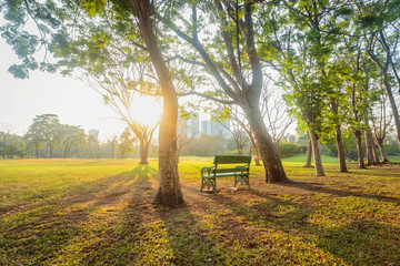 Morning, Beautiful park scene in public park with green grass field, Bankok, Thailand.
