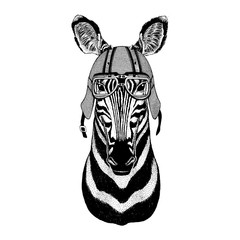 Zebra Horse wearing biker helmet Animal with motorcycle leather helmet Vintage helmet for bikers Aviator helmet