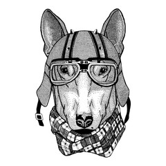 DOG for t-shirt design wearing biker helmet Animal with motorcycle leather helmet Vintage helmet for bikers Aviator helmet