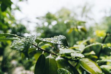 rain drop on leaves