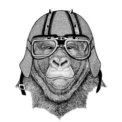 Gorilla, monkey, ape Frightful animal wearing biker helmet Animal with motorcycle leather helmet Vintage helmet for bikers Aviator helmet