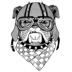 Bulldog wearing biker helmet Animal with motorcycle leather helmet Vintage helmet for bikers Aviator helmet