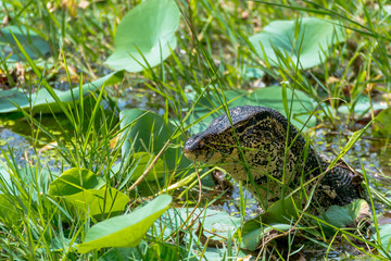 Close Up View of Reptile on Natural Pond
