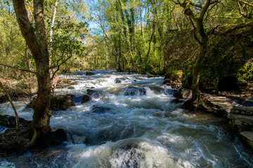 Scenics View of River Stream Amidst Forest Trees