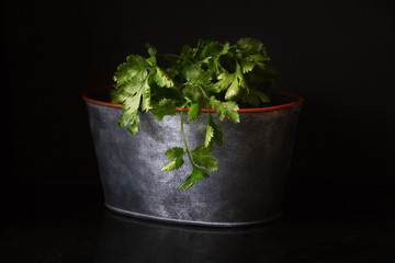 Cilantro in a pot on a black background.