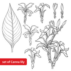 Vector set with outline Canna lily or Canna, flower bunch, bud and leaf in black isolated on white background. Floral element in contour style with ornate flower for summer design and coloring book.