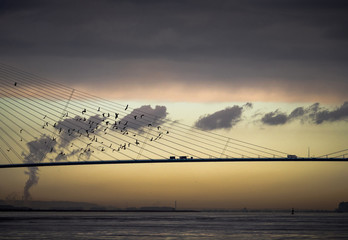 Flock Of Birds Flying By Bridge Over River Against Sky During Sunset