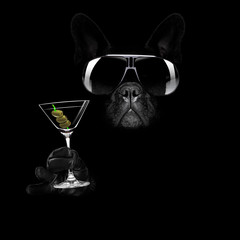 martini cocktail dog