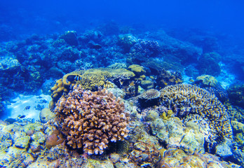 Coral reef underwater landscape. Diverse coral shapes. Coral fish in reef.