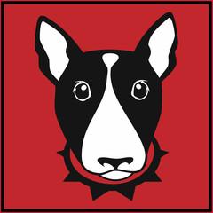 Cute bull terrier with dog collar