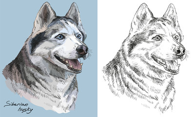 Colorful and monochrome hand drawing vector portrait of siberian husky