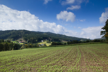 View over a field in the Bavarian forest region
