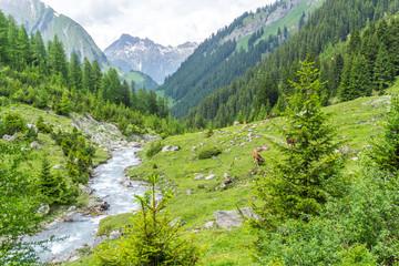 Natur, Tiere, Pflanzen, Wandern, Erleben
