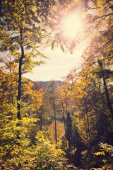 landscape from the black forest with sunshine